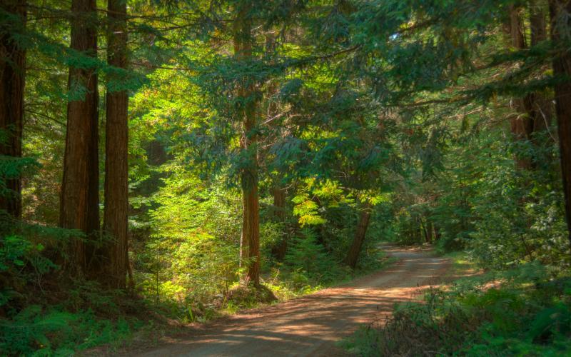 Pescadero Creek Park -OldHaulRoadTrail