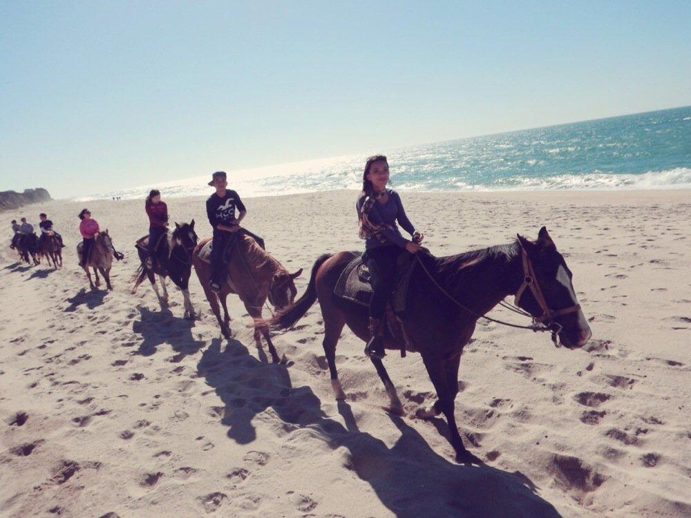 sea horse ranch -1